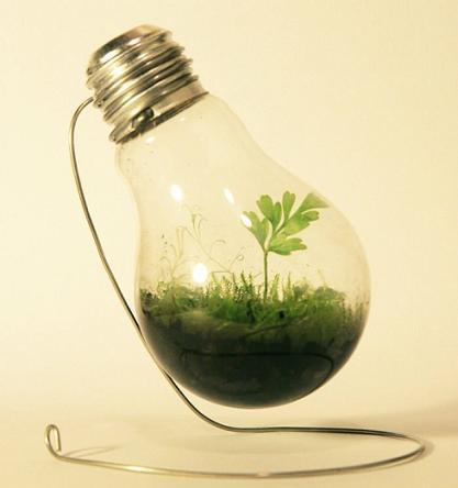 reused lightbulb