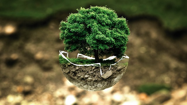 ways to save earth - tree