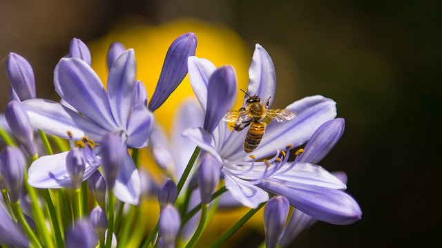 insects - bee